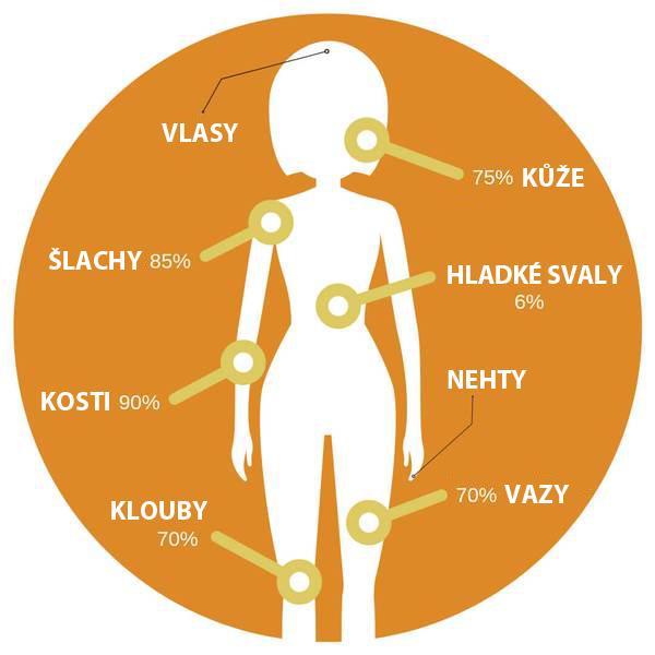 Kolagen a lidské tělo