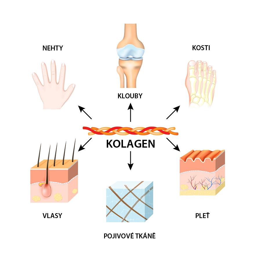 Typy kolagenu 1, 2, 3